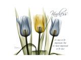 Tulip Kindness Giclée-Premiumdruck von Albert Koetsier