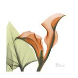 Orange Calla Reproduction giclée Premium par Albert Koetsier