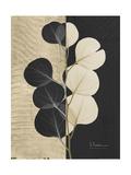 Eucalyptus Invert Posters af Albert Koetsier