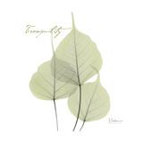Bo Tree Tranquility Reproduction giclée Premium par Albert Koetsier