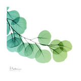 Eucalyptus Green Print by Albert Koetsier