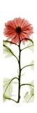 Red Chrysanthemum Premium Giclee-trykk av Albert Koetsier