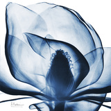Magnolia Indigo Kunstdrucke von Albert Koetsier