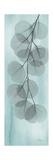 Blue Stone Eucalyptus Poster by Albert Koetsier