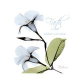 Mandelila Bloom Giclée-Premiumdruck von Albert Koetsier