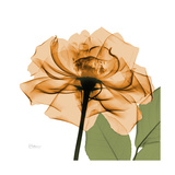 Copper Rose Premium Giclee Print by Albert Koetsier