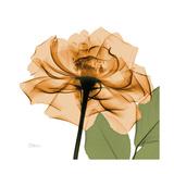 Copper Rose Stampa giclée premium di Albert Koetsier