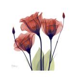 Ruby Gentian Premium Giclee Print by Albert Koetsier