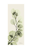 Eucalyptus Moment Plakat af Albert Koetsier