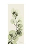 Eucalyptus Moment Kunstdruck von Albert Koetsier