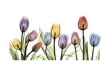 Tulipscape Portrait Premium Giclee-trykk av Albert Koetsier