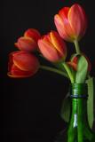 Green Bottle Fotografisk trykk av Bob Rouse