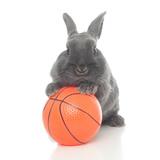 Rabbits 016 Impressão fotográfica por Andrea Mascitti