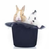 Rabbits 014 Photographic Print by Andrea Mascitti