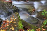 Leaves on Rocks Fotografisk trykk av Bob Rouse
