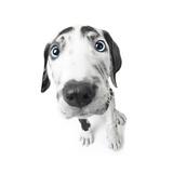 Puppies 027 Impressão fotográfica por Andrea Mascitti