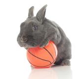 Rabbits 015 Impressão fotográfica por Andrea Mascitti