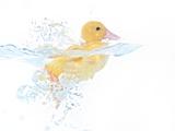 Ducks 001 Photographic Print by Andrea Mascitti