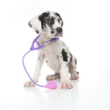 Puppies 026 Impressão fotográfica por Andrea Mascitti