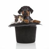 Puppies 052 Impressão fotográfica por Andrea Mascitti