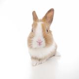 Rabbits 007 Impressão fotográfica por Andrea Mascitti