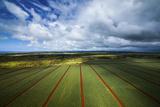 Pineapple Fields Reproduction photographique par Cameron Brooks