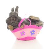 Rabbits 003 Impressão fotográfica por Andrea Mascitti