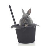 Rabbits 002 Impressão fotográfica por Andrea Mascitti