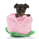 Puppies 066 Impressão fotográfica por Andrea Mascitti