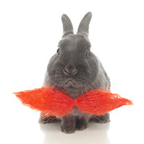 Rabbits 018 Photographic Print by Andrea Mascitti