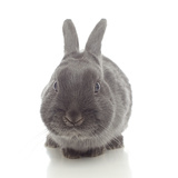 Rabbits 005 Photographic Print by Andrea Mascitti