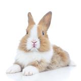 Rabbits 008 Photographic Print by Andrea Mascitti