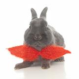 Rabbits 017 Impressão fotográfica por Andrea Mascitti