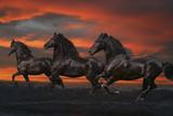 Fantasy Horses 37 Fotografie-Druck von Bob Langrish
