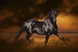 Fantasy Horses 33 Fotografie-Druck von Bob Langrish