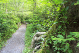 Alum Cave Trail Fotografisk trykk av Bob Rouse