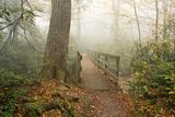 Alum Trail Fotografisk trykk av Bob Rouse