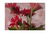 Gerber Garden Giclee-trykk av Bob Rouse