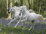 Unicorn 59 Lámina fotográfica por Bob Langrish