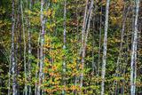 Colorful Autumn Leaves Fotografisk trykk av Bob Rouse