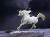 Unicorn 56 Lámina fotográfica por Bob Langrish