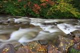 Fall Leaves on Rocks Fotografisk trykk av Bob Rouse