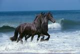 Friesians Sea Fotografie-Druck von Bob Langrish