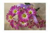 Purple Daisy Mums Giclee-trykk av Bob Rouse