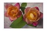 Two Roses Giclee-trykk av Bob Rouse