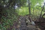 steps Fotografisk trykk av Bob Rouse