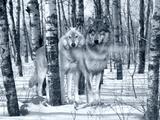 Snow Shadows Silvertones Fotografie-Druck von Gordon Semmens