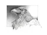 Ravens Head Reproduction procédé giclée par Durwood Coffey