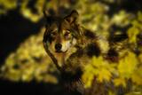 Gold Shadows Fotografie-Druck von Gordon Semmens