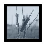Ice Cattail 1 Giclée-vedos tekijänä Gordon Semmens